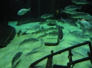 Aquarium Bremerhaven 1